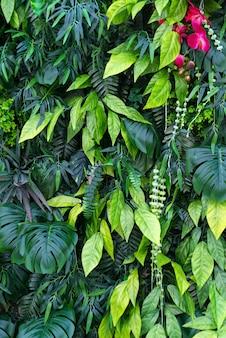 熱帯の葉と花の背景。熱帯の緑の葉と垂直庭園の自然の背景