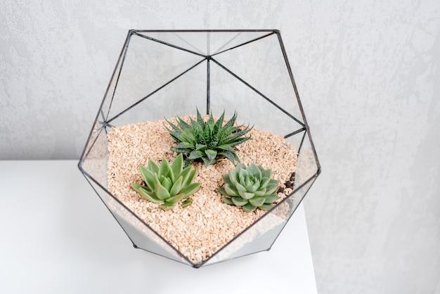Стеклянная ваза флорариум с суккулентных растений и небольшой кактус на белом столе.