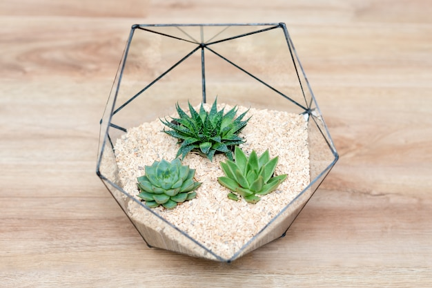 多肉植物と木の小さなサボテンのガラス花瓶の花瓶