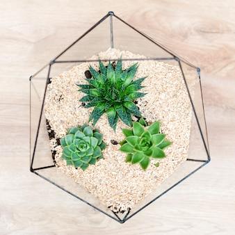 Стеклянная флорариумная ваза с суккулентными растениями и маленьким кактусом на дереве