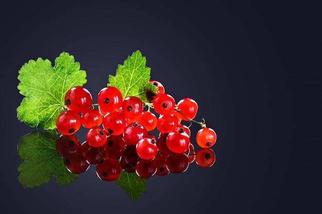 黒い背景に熟した赤スグリの果実。