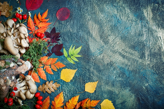暗い背景に紅葉、キノコ、果実