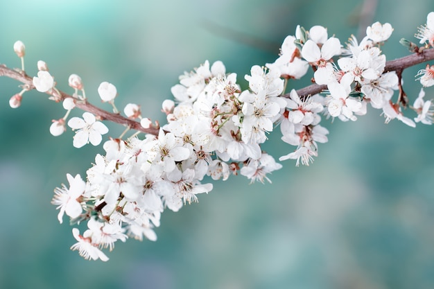 春の庭に咲く美しいリンゴの木。閉じる。