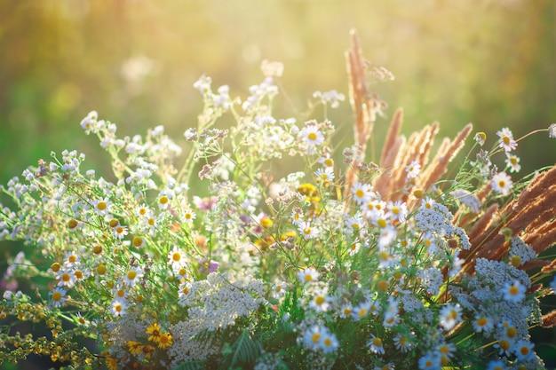 美しい野生の花。