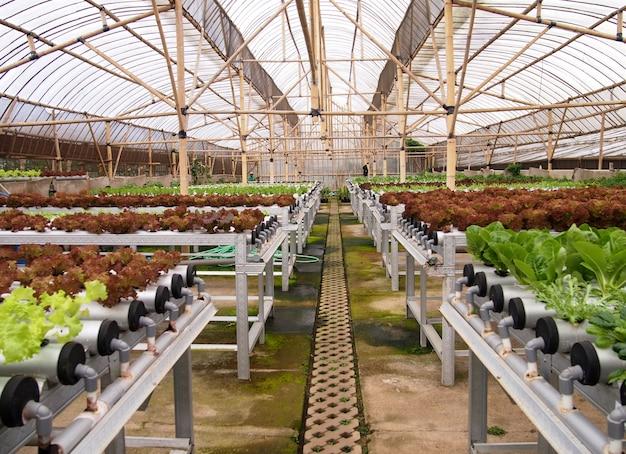 水耕栽培野菜農場の家