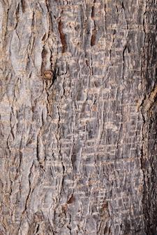 熱帯の木のテクスチャの背景。