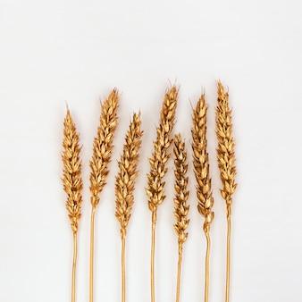 小麦の秋の耳の金色、創造的なフラットは明るいコンクリートの背景に置く