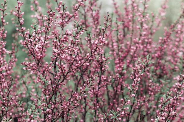 Цветущее дерево с маленькими розовыми цветами и каплями дождя над природой.