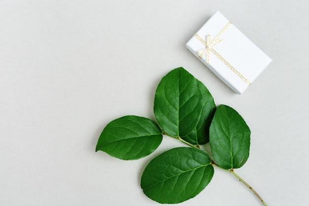 Натуральная ветвь растения с зелеными листьями и небольшой подарочной коробкой