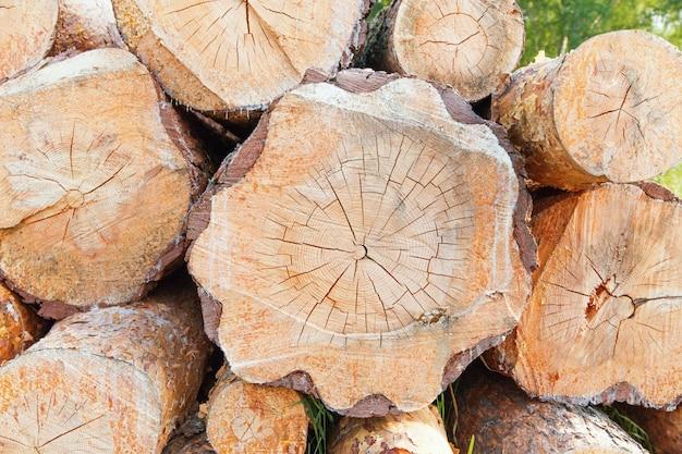 Куча древесины для хранения бревен, для промышленности. постаретый кусок дерева с текстурой. фон кольцевых лесов