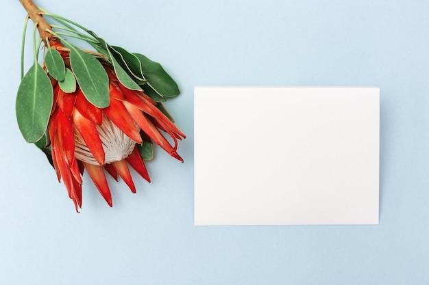 プロテアの花、大きな美しい植物、白い文字、青い背景に。はがきや誕生日、記念日、結婚式の招待状の最小限の組成の背景。上面図。