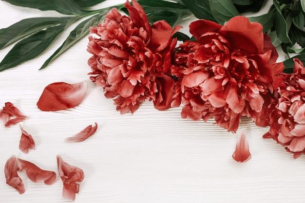 赤い牡丹。牡丹の花が咲きます。白い木製の背景にブルゴーニュの牡丹。セレクティブフォーカス。