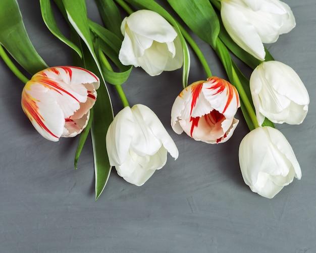 Букет из ярких цветущих тюльпанов белого и красного цвета. весенние цветы на сером фоне конкретных с копией пространства.