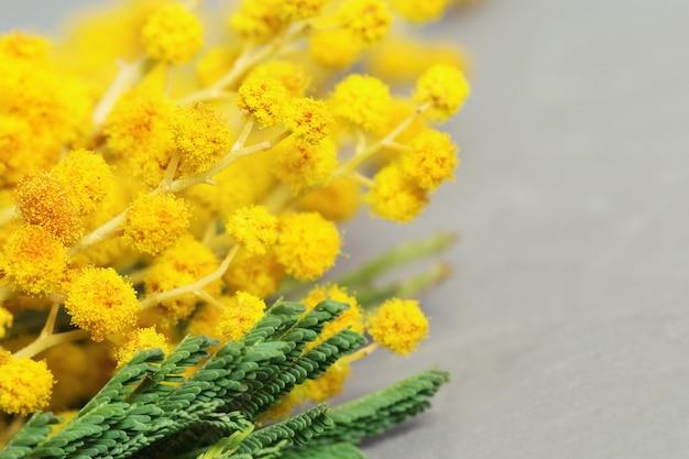 コピースペースと灰色の背景をぼかした写真にミモザのクローズアップのふわふわの黄色い花の小枝。