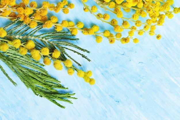 黄色のミモザの青いコンクリートの枝に咲くミモザ春の花がコピースペースでクローズアップ。セレクティブフォーカス。