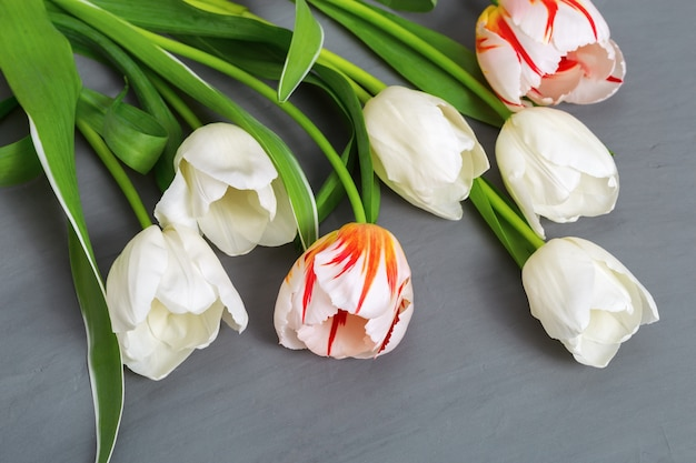 コピースペースを持つ灰色のコンクリートに新鮮な白と赤のチューリップの花束。自然な白い花。上面図。