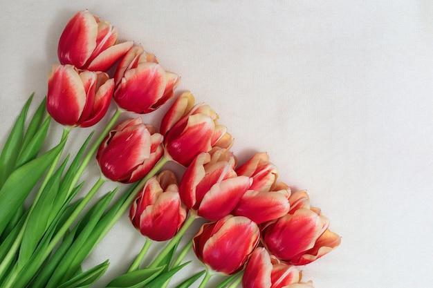 Красные тюльпаны с зелеными листьями