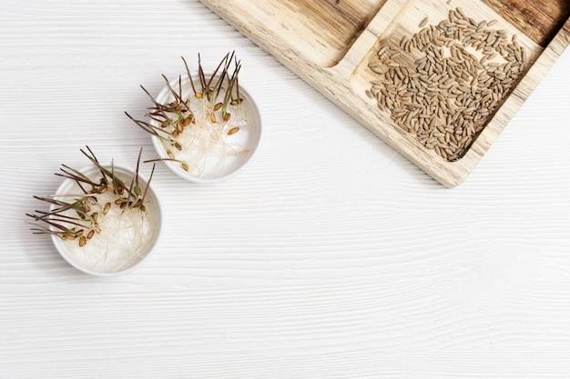 コピースペースを持つ木製の背景に小麦を芽します。健康的なベジタリアン料理。家庭での小麦種子の発芽。