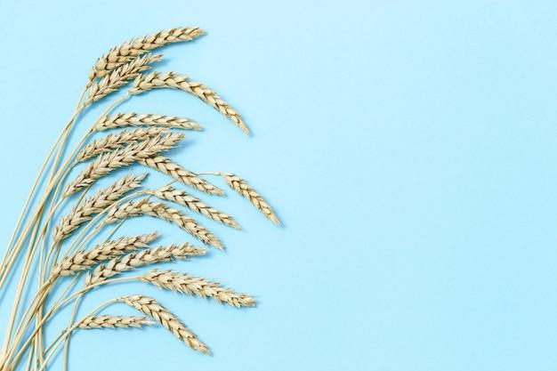 熟した小麦の耳。熟した耳と青い空色の背景をクローズアップ。
