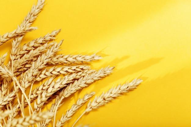 Колосья пшеницы крупным планом с тенями от солнечных лучей