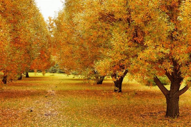 公園の秋の木々