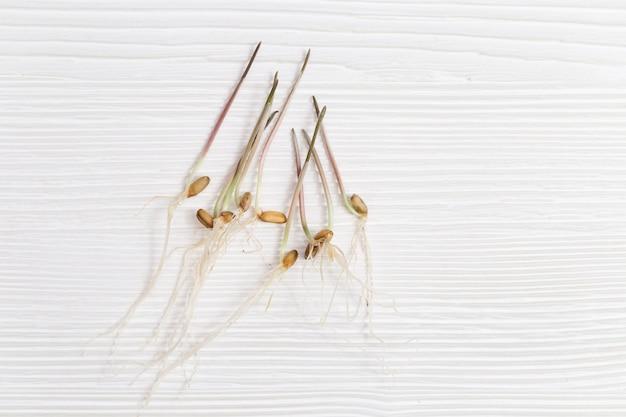 Прорастание семян пшеницы для еды