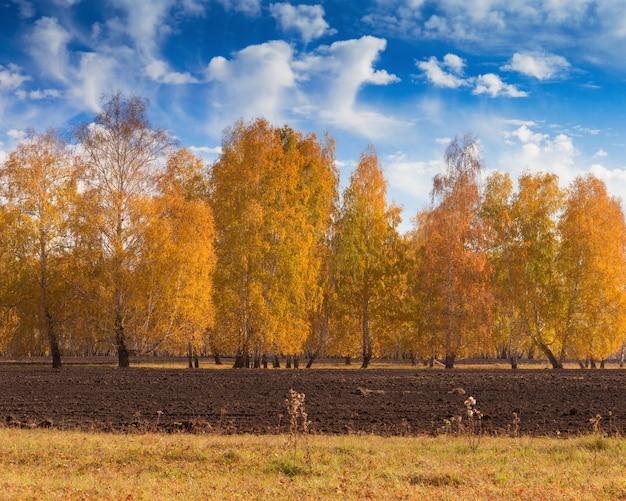 Деревья с желтыми листьями.