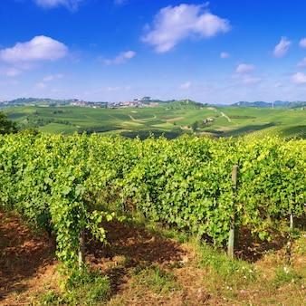 Пейзаж с виноградниками в летний день.
