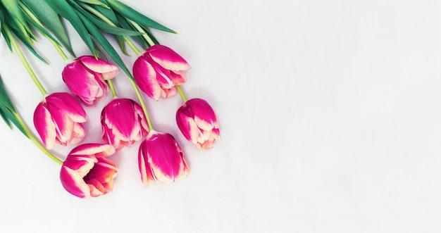 テキストのコピースペースを持つ明るい布の上の花紫チューリップの花。テーブルの上に生花を切る。