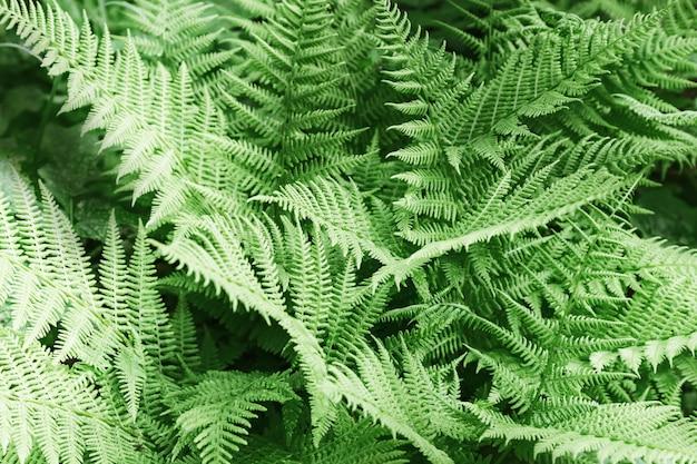 維管束植物からの自然な背景