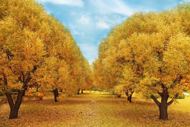 黄金の秋。柳の木のある秋の風景。