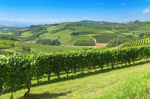イタリアの農地ランゲ地方、イタリア、ピエモンテの丘陵の谷。イタリアのブドウ畑