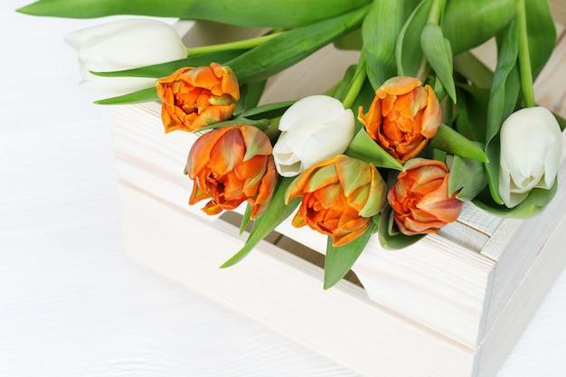 白とオレンジの咲くチューリップのつぼみ