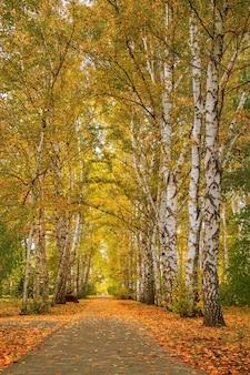 秋の風景。シベリアの黄金色の秋。