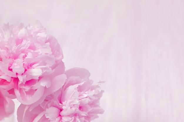 ピンクの花牡丹の花の背景