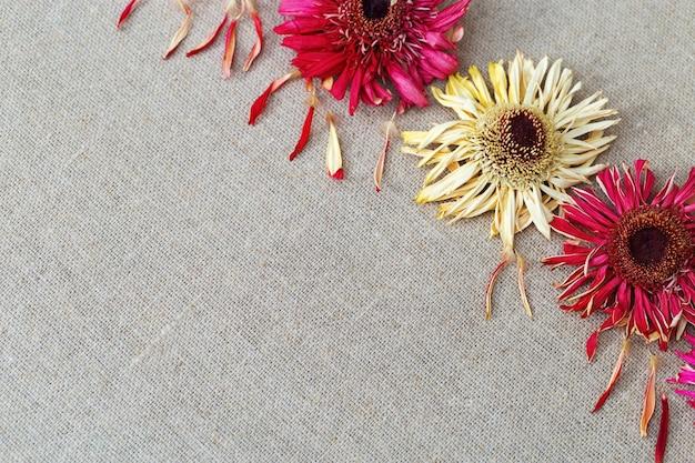 リネンの布に乾燥花ガーベラと自然な背景。テキストのコピースペース。