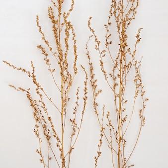 Золото окрашены растения на светлом фоне. минимальный модный. осенний натюрморт тренд цвет. природа травы. квартира лежала.