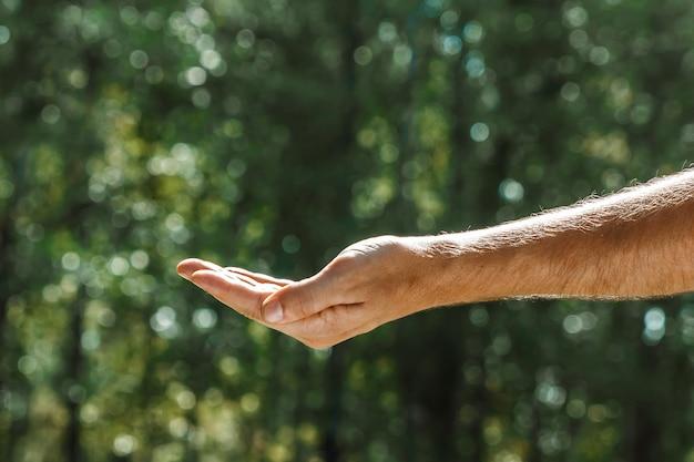 夏の緑に対する女性の手のひら