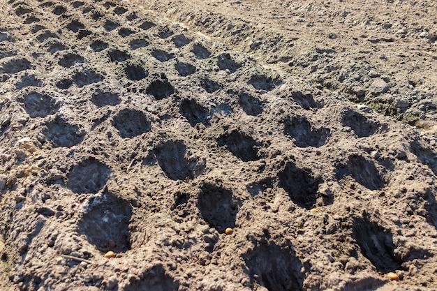 ジャガイモを手で植え、ジャガイモを植えるための土を準備する