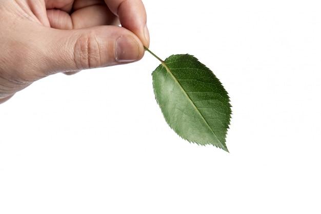 白い背景の上の緑の葉を持つ男性の手