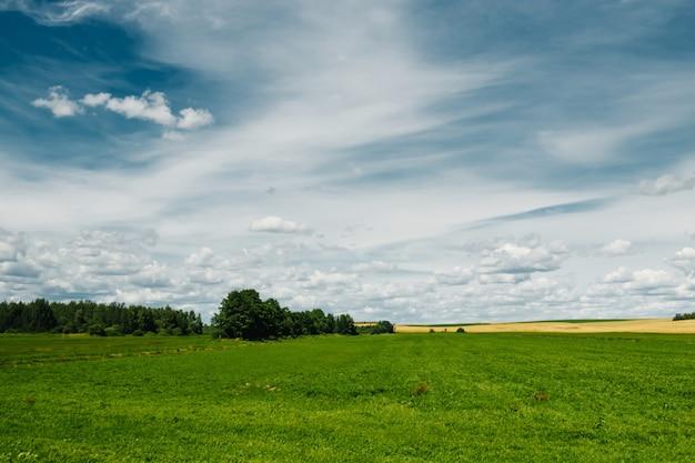 緑の野原、青い空、白い雲。