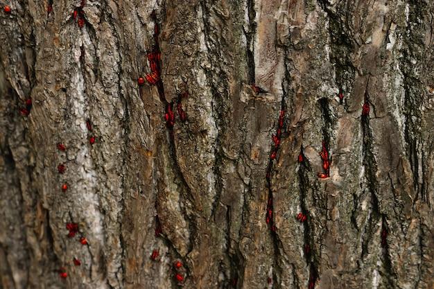 黒と赤の木の昆虫の樹皮に隠れて