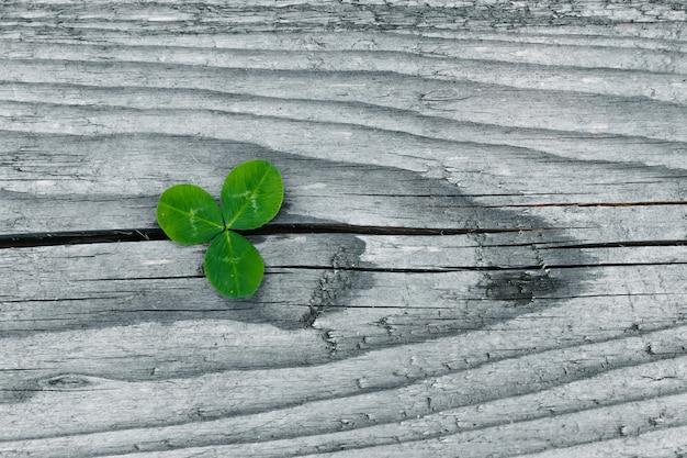 Клевер на старом деревянном гранж, листья трилистника, день святого патрика
