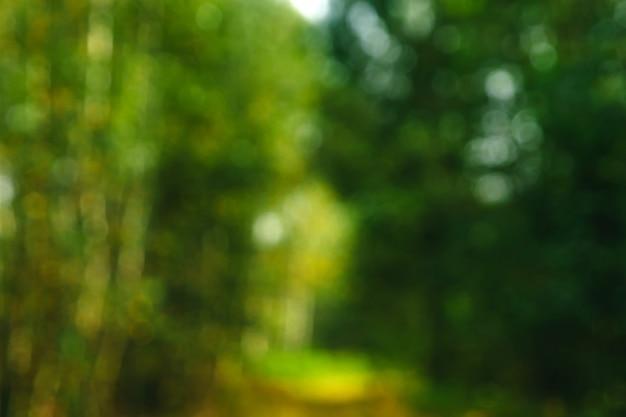 Натуральный зеленый яркий размытый солнечный летний лес