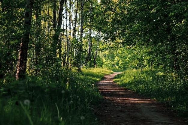 緑のトンネル竹本物の自然、緑の森。