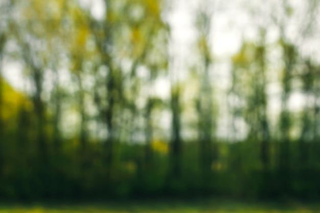 森の中の緑の自然