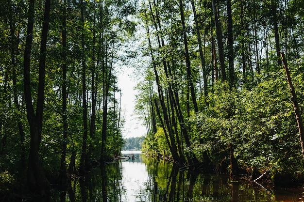 川、木のトンネル、自然