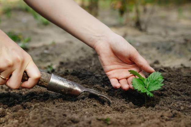 女性の手は土に芽を出し、クローズアップ、ガーデニングの概念、ガーデニング。コピースペース