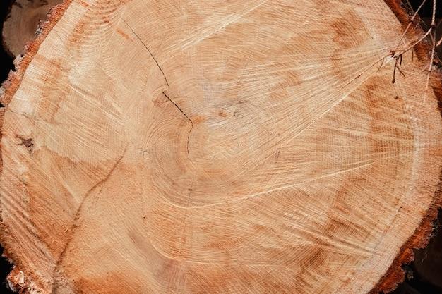 分離された木の幹の断面