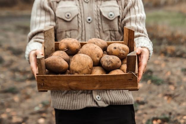 庭でジャガイモの収穫を手で保持している農家。有機野菜。農業。